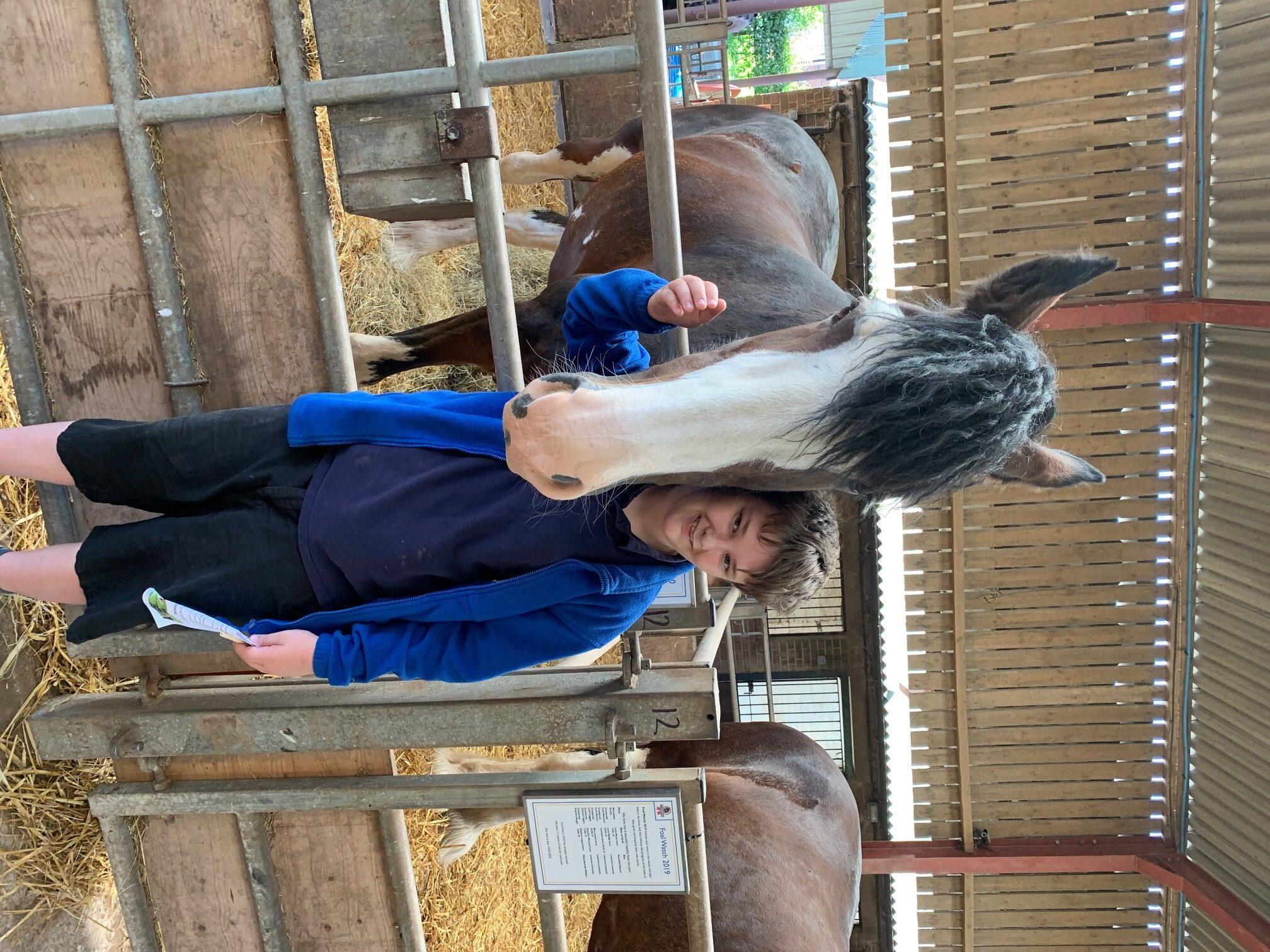Student Reward Time At Cotebrook Shire Horse Centre