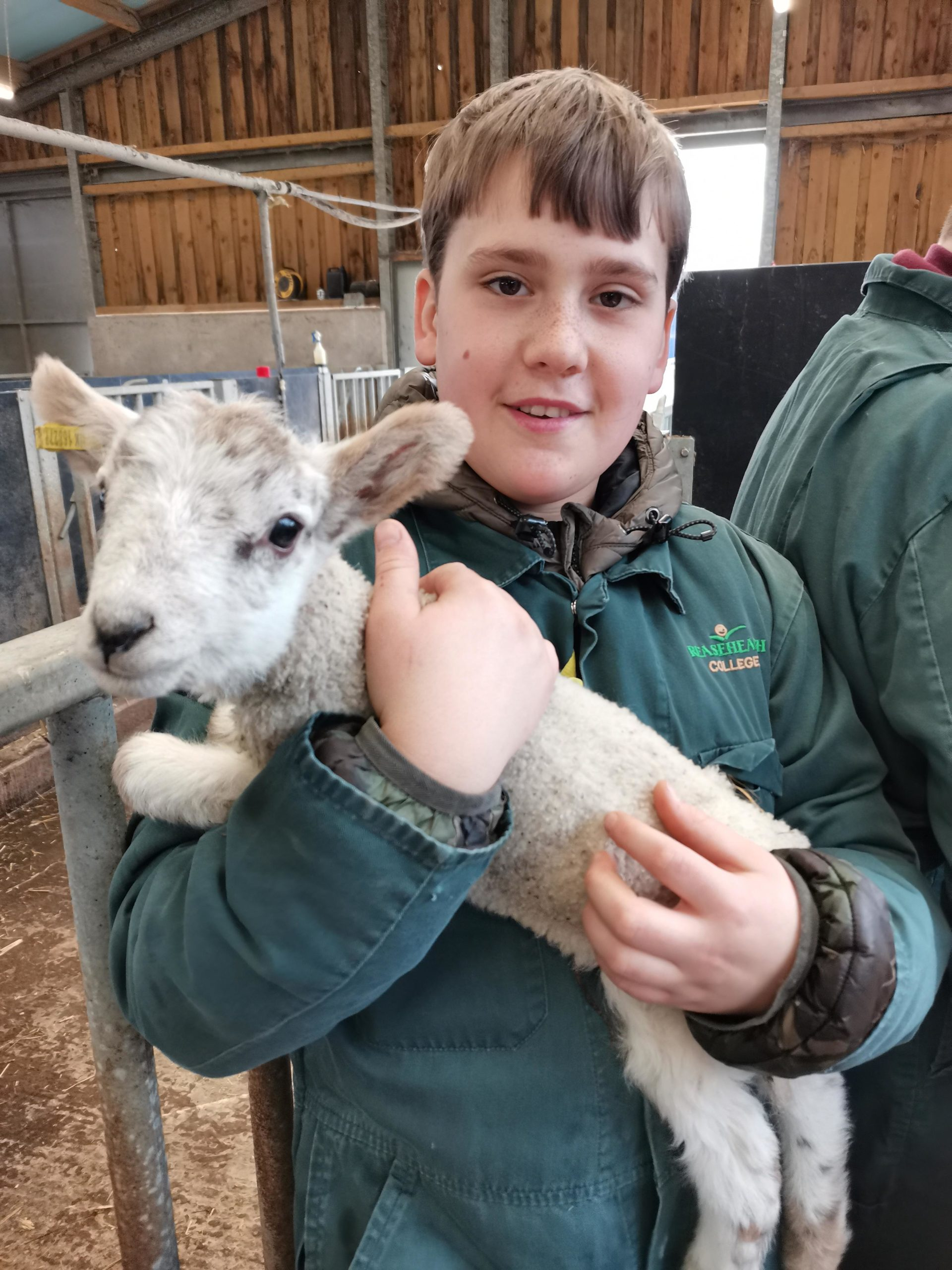 Reaseheath College Lambing